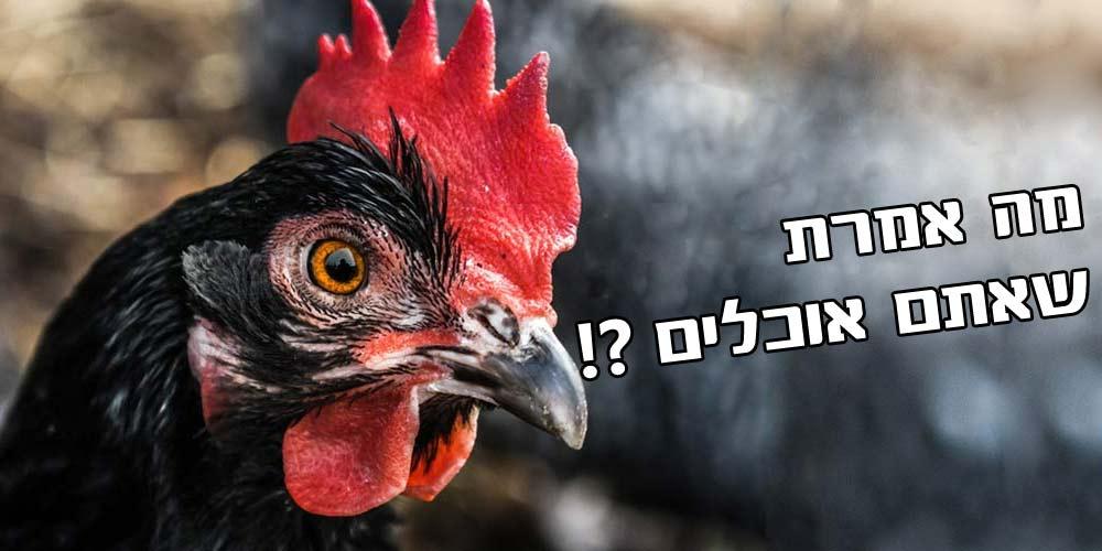 תרנגולת מופתעת
