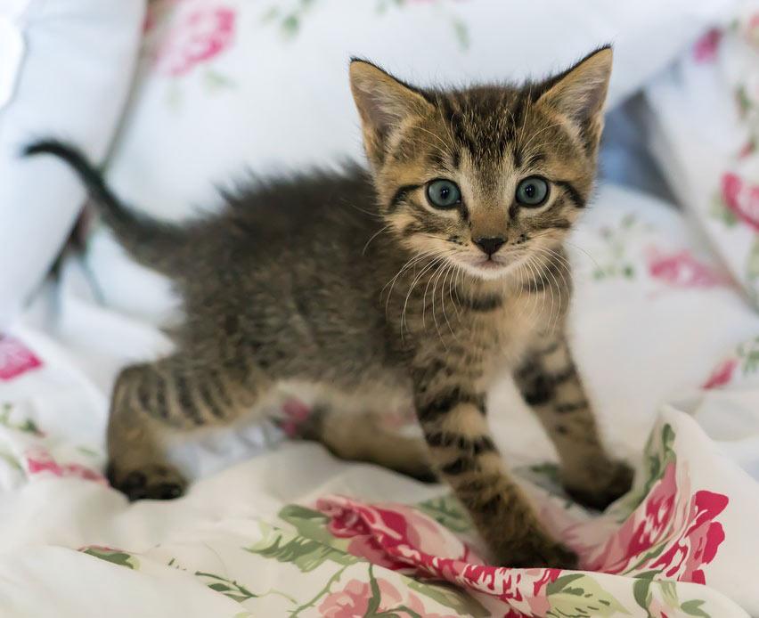 גור חתולים חמוד